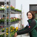 Grünwerkstatt Herbstblumen